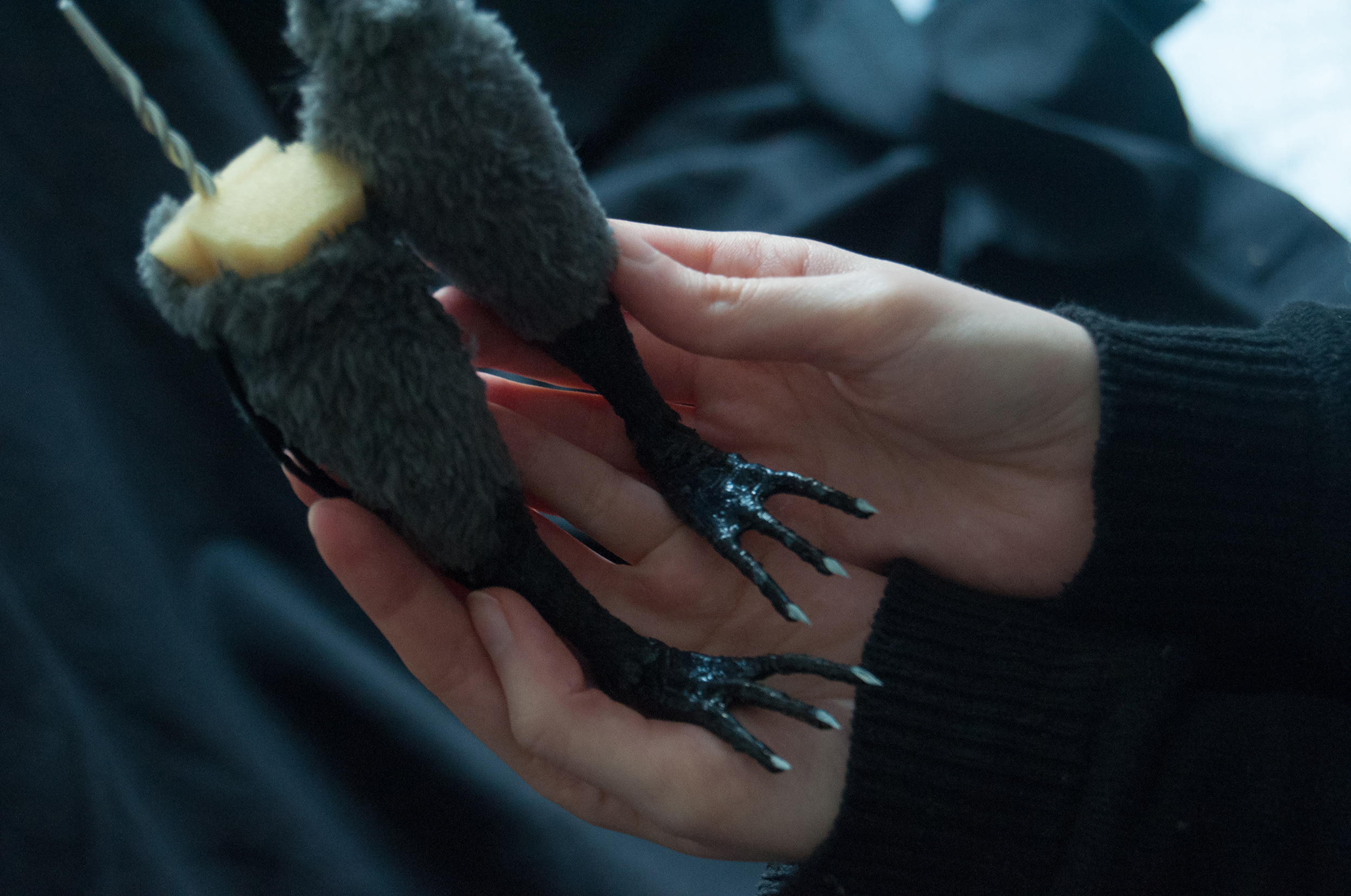 """Freak of Nature"" film: Interview with stop-motion artist Alexandra Lermer"